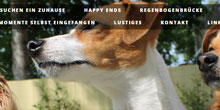 Beispiel-Seiten hund-sucht-dich.de.tl