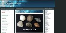 Ejemplos brachiopods.es.tl
